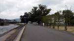 竹田公園川沿いの椋の木