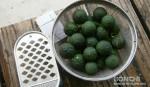 柚子を収穫