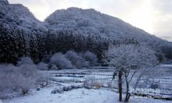 雪の風景(大山町)