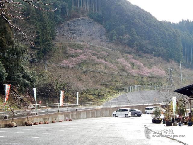 木の花ガルテンの花文字(2月13日撮影)
